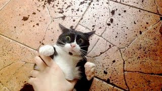 Try not to FAINT FROM LAUGHING - Best FUNNY ANIMAL FAILS & MOMENTS compilation