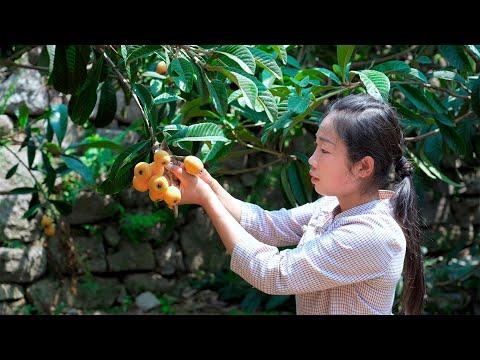 個頭又大又甜的枇杷,摘回來做成枇杷銀耳羹給一家人嚐嚐,在熬� 一鍋枇杷果醬,把美味保存起來Food made by loquat Chinese Food美食 野小妹wild girl