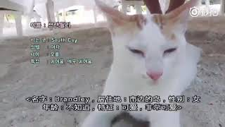 JIMIN BTS with cat/brandley at summer package 2017