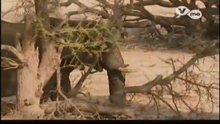 El Desierto del Namib - Adaptados al Desierto