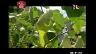 Avwe Muthukata Ahura Ape Appachchi   Krishantha Erandaka