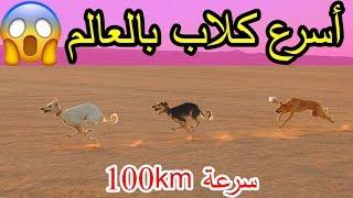 أسرع كلاب بالعالم/مطاردة خطيره مع سيارة!!!