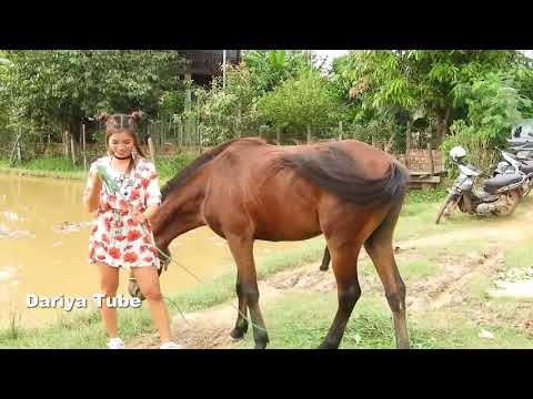 Xxx Mp4 Lady Feeding Green Grass To Horse At Rice Field 3gp Sex