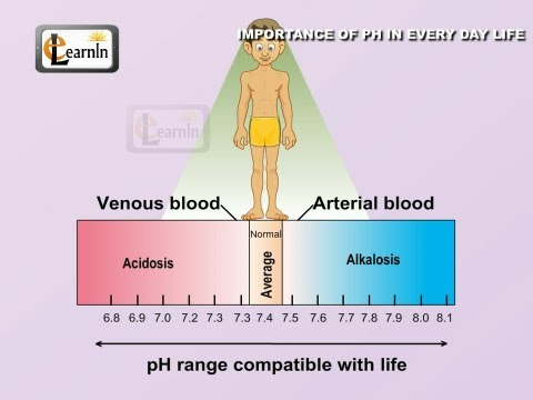 Importance of pH in every day life - Science