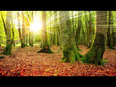 Healing Meditation Music Relaxing Music Music for Stress Relief Background Music ☯3354