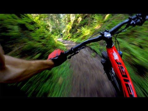 World Cup XC is no joke   Mountain Biking Dalby Forest
