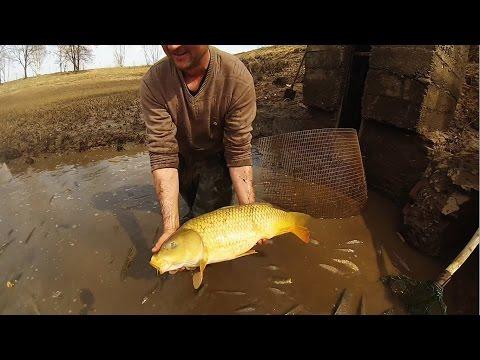 карп пруд рыбалка