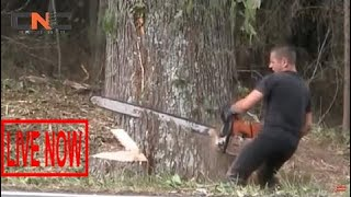 Dangerous Biggest  Chainsaws Trees Cutting, Latest Skills Felling Redwood Tree Milling #SON