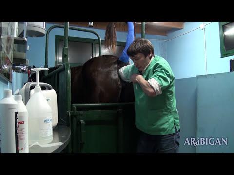 Inseminación Artificial. Semen Refrigerado y Congelado en caballos