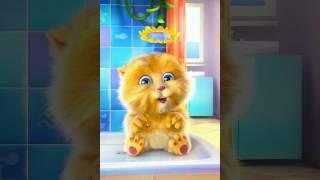 Baby comedy cat