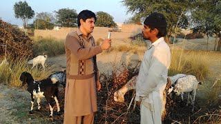 Free Goat Farming  in pakistan urdu/hindi