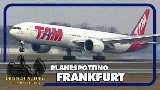Planespotting Frankfurt Airport | November 2017 | Teil 1