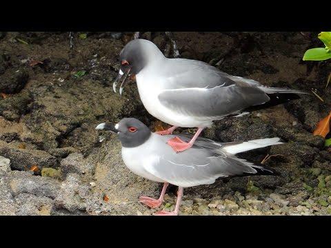 Xxx Mp4 Bird Sex In The Galapagos 3gp Sex
