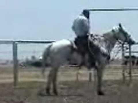 Xxx Mp4 White College Rodeo Calf Horse Movie 3gp 3gp Sex