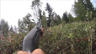 Kyyhkyn aloitus 2016 / Pigeon hunting in Finland 2016