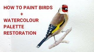 How to Paint Birds in Watercolour & Coloured Pencils + Watercolour Palette Restoration