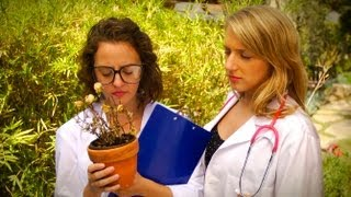How to Tell if a Plant is Dead and Regenerate a Sick Plant!
