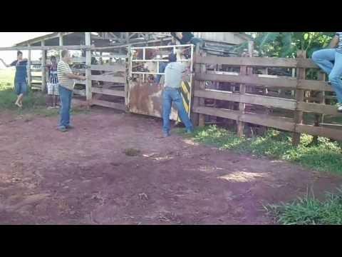 rodeio em touros Danilo paiva