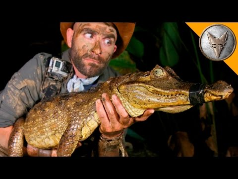 DANGEROUS Caiman Catch