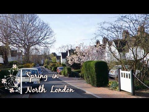 Spring in North London   Flowers & Flowering trees