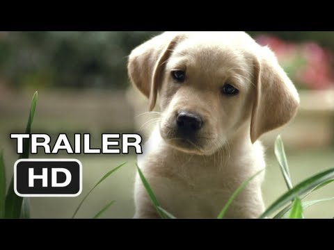 Xxx Mp4 Quill The Life Of A Guide Dog Official Trailer 1 2012 HD Movie 3gp Sex