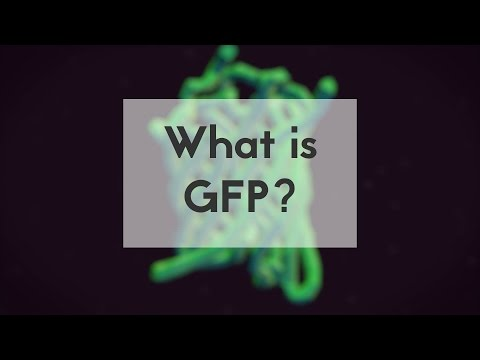 What is GFP?