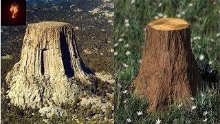 Gigantic Ancient Trees Found In Dakota?
