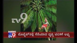 Kerala: Bhoota Kola Performer Falls Off from Coconut Tree during Ritual