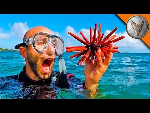 Fantastic Sea Creatures and Where to Find Them