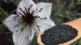 """خواص سیاه دانه و درمان 1000 درد با """"سیاه دانه"""""""