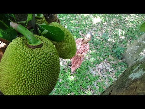 Xxx Mp4 Organic Village Food ❤ Cooking Traditional Little Green Jackfruit Curry In My Village By Grandma 3gp Sex