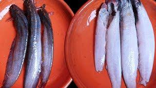 শিং মাছ কাটা এবং পরিস্কার করার সহজ পদ্ধতি|how to clean shing mach|Shing Fish cutting system
