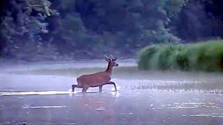 Naše Divlje životinje - Obrazovni Program