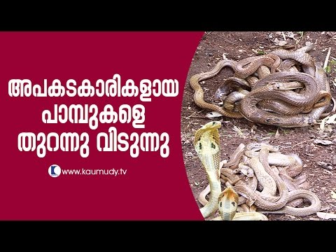 Xxx Mp4 Wow Vava Suresh Releasing Dangerous Snakes Into Forest Snake Master EP 253 Kaumudy TV 3gp Sex