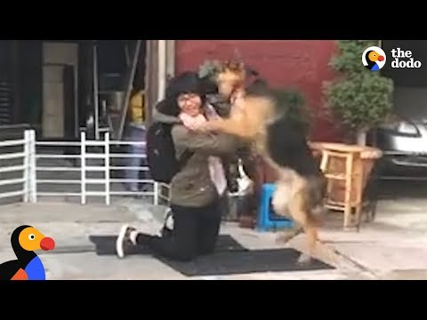 Xxx Mp4 German Shepard Dog Reunited With Owner Is SO EXCITED The Dodo 3gp Sex