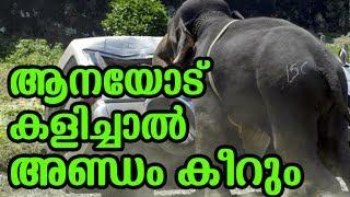 ആനയോട് കളിച്ചാൽ അണ്ഡം കീറും | Elephant shocking video