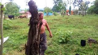 Caldero el hombre millonario de la masica atlantida Honduras