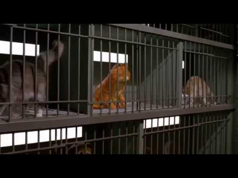 Xxx Mp4 Garfield 1 Le Film En Francais 3gp Sex