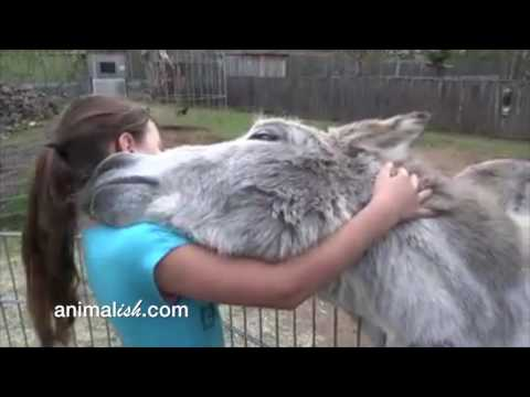 Xxx Mp4 Donkey And Girl Are Best Friends 3gp Sex