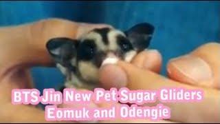 BTS Jin New Pet Sugar Gliders