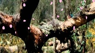 Kumar Sanu Lovely Song Mere Humsafar Full HD 1080P