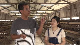 UpClose: A Quail Farm in Singapore