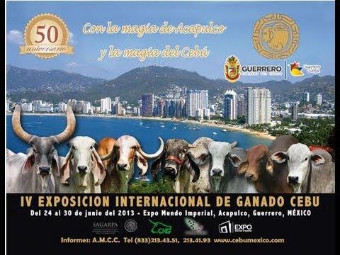Mulato II en la Exposicion Internacional de Ganado Cebu Acapulco Gro 2013