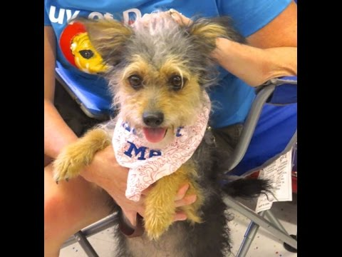 Little Girl- an adorable small dog for adoption !!!