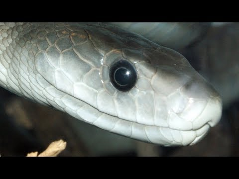 Most VENOMOUS Snakes On Earth