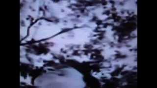 O BEKARAR DIL -A HAUNTING MELODY BY LATA MANGESHKAR FROM