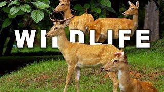WILDLIFE IN 4K (ULTRA HD) 60fps