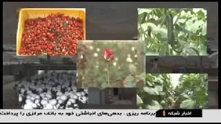 Iran Kowsar Greenhouse village, Khalajestan district, Qom دهكده گلخانه اي كوثر بخش خلجستان قم