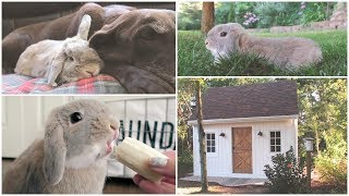 Marshmallow My Holland Lop Bunny - Cute & Funny Rabbit Compilation + New Bunny House