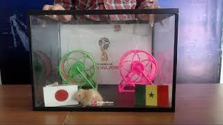 Prediksi Jepang vs Senegal di Piala Dunia 2018 bersama PO si Hamster